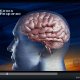 Effects of Chronic Stress on the Brain – a CBS Video Short