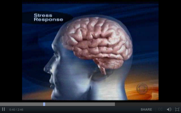 Effects of Chronic Stress on the Brain - a CBS Video Short